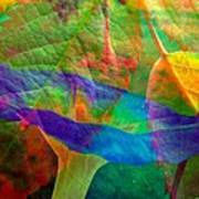 Colors Of Autumn Poster by Shirley Sirois