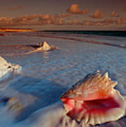 Conch Shell On Beach Poster by Novastock and Photo Researchers