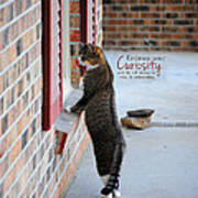 Curiosity Inspirational Cat Photograph Poster by Jai Johnson