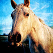 Curious Horse Poster by Toni Hopper