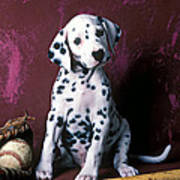 Dalmatian Puppy With Baseball Poster by Garry Gay