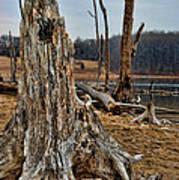 Dead Wood Poster by Paul Ward