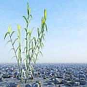 Desert Plant, Artwork Poster by Carl Goodman