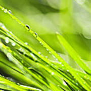 Dewy Green Grass  Poster by Elena Elisseeva