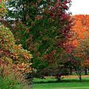 Distant Fall Color Poster by Scott Hovind