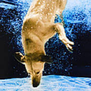 Diving Dog 3 Poster by Jill Reger