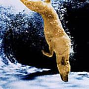Diving Dog Poster by Jill Reger