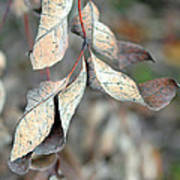 Dry Leaves Poster by Lisa Phillips