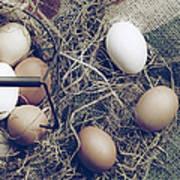 Eggs Poster by Joana Kruse