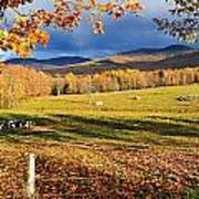 Fall Colours, Cows In Field And Mont Poster by Yves Marcoux