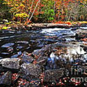 Fall Forest And River Landscape Poster by Elena Elisseeva