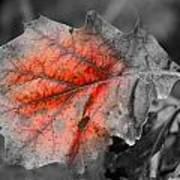 Fall Leaf Poster by Rick Rauzi