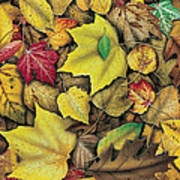 Fall Leaf Study Poster by JQ Licensing