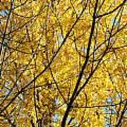 Fall Trees Art Prints Yellow Autumn Leaves Poster by Baslee Troutman