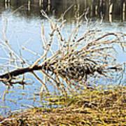 Fallen Tree Poster by Douglas Barnard