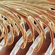 Feather Barbules, Sem Poster by Power And Syred
