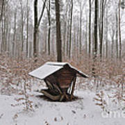 Feed Box In Winterly Forest Poster by Matthias Hauser