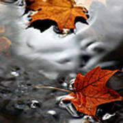 Floating Maple Leaves Poster by LeeAnn McLaneGoetz McLaneGoetzStudioLLCcom
