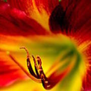 Floral Macro Of A Blossom Poster by Floyd Menezes
