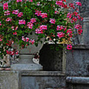 Flowers On The Steps Poster by Mary Machare