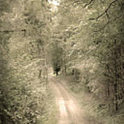Forest Path Poster by Svetlana Sewell
