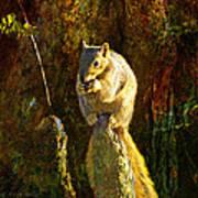 Fox Squirrel Sitting On Cypress Knee Poster by J Larry Walker