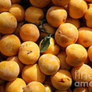 Fresh Yellow Plums - 5d17814 Poster by Wingsdomain Art and Photography