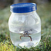 Frog In A Jar Poster by Adam Crowley