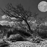 Full Moon Over Jekyll Poster by Debra and Dave Vanderlaan