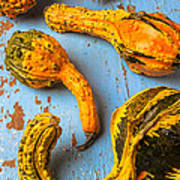 Gourds On Wooden Blue Board Poster by Garry Gay