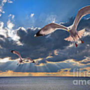Greek Gulls With Sunbeams Poster by Meirion Matthias