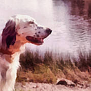 Handsome Hunter. English Setter Poster by Jenny Rainbow
