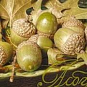 Hdr Green Acorns In A Dish Poster by Jennifer Holcombe