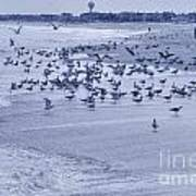 Hdr Seagulls At Play In The Sand Poster by Pictures HDR