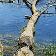 Herrick Lake Poster by Todd Sherlock