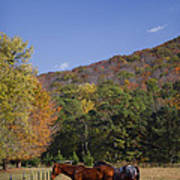 Horses And Autumn Landscape Poster by Kathy Clark