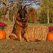 Hoss In Autumn II Poster by Sandy Keeton