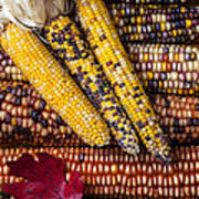 Indian Corn Poster by Garry Gay