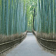 Japan Kyoto Arashiyama Sagano Bamboo Poster by Rob Tilley