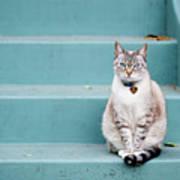 Kitty On Blue Steps Poster by Lauren Rosenbaum