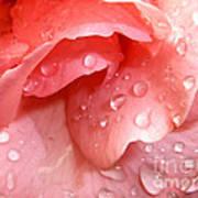 La Vie En Rose Poster by Jan Willem Van Swigchem