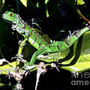 Leapin Lizards Poster by Karen Wiles