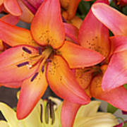 Lilies Background Poster by Jane Rix