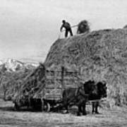 Loading Hay Poster by Arthur Rothstein