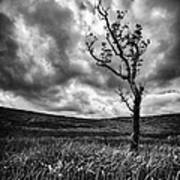 Lone Tree On The Ayrshire Moors Poster by John Farnan