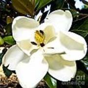 Magnolia Poster by Clinton Lundberg