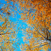 Meet In Heaven. Autumn Glory Poster by Jenny Rainbow