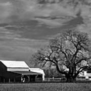 Moon Lit Farm Poster by Todd Hostetter