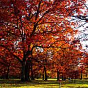 Morton Arboretum In Colorful Fall Poster by Paul Ge