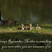 Mother's Watchful Eye Poster by Kathy Clark